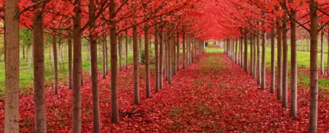осень осенняя записка